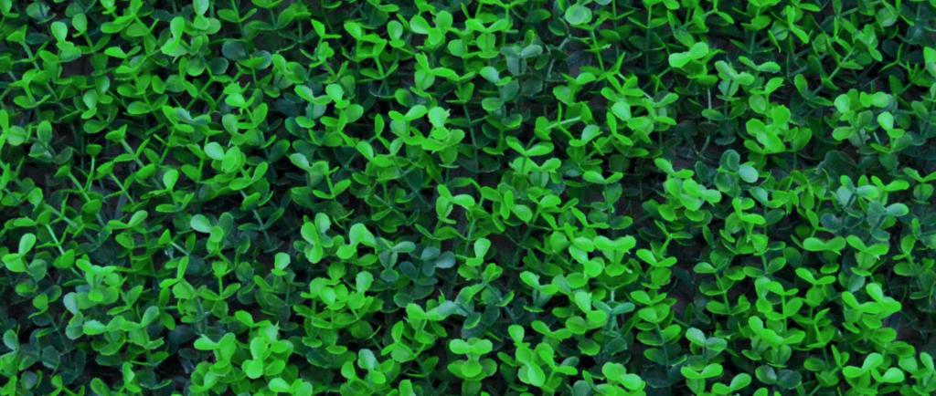 Arrayán Verde