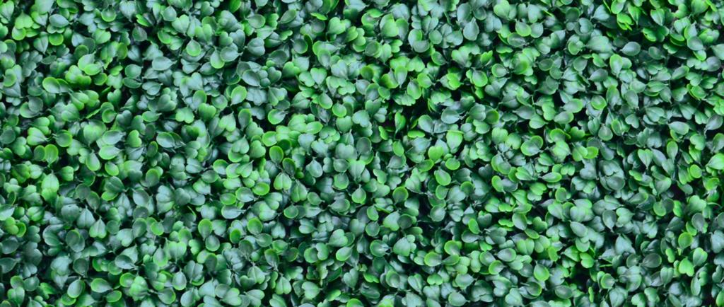 Boxus Verde